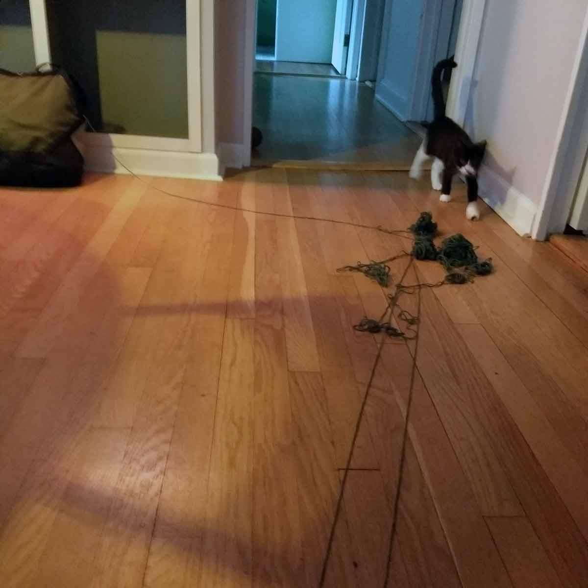tangled yarn on wood floor and kitten walking toward camera