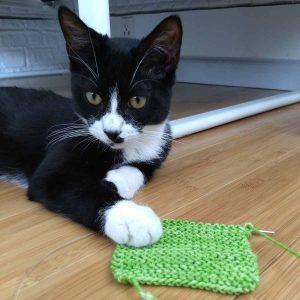 Black & White Tuxedo Kitten with Poison Apple colour Oink Pigments garter stitch swatch.