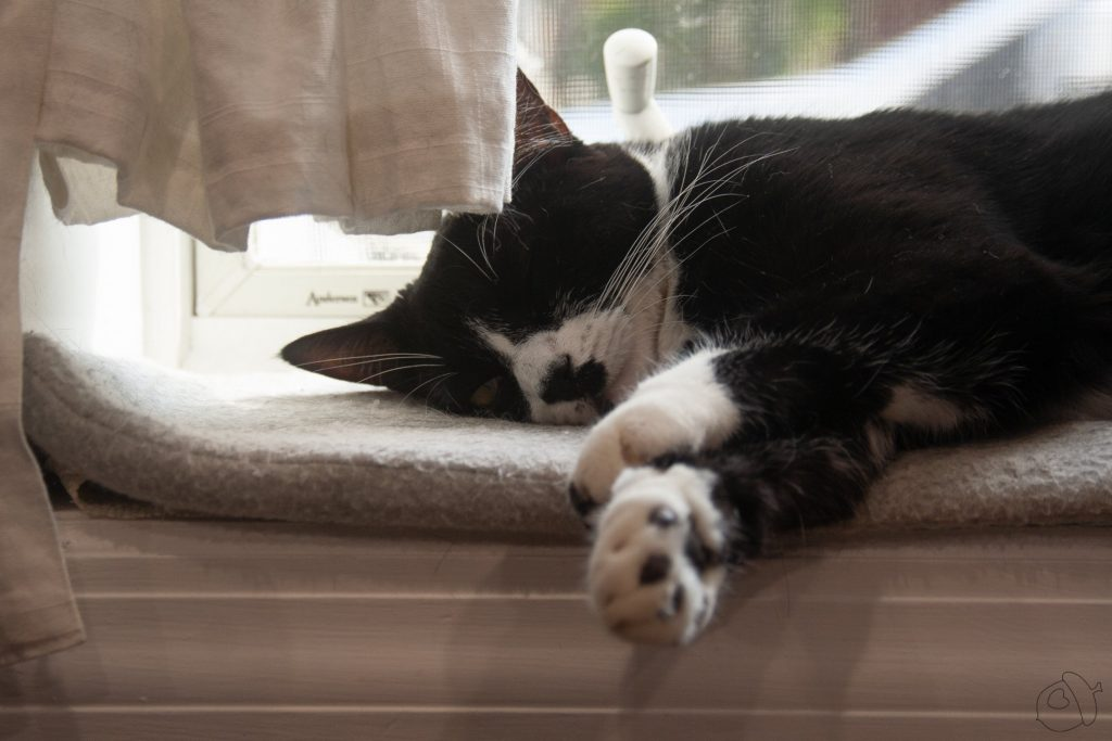 Dot cat asleep on a windowsill