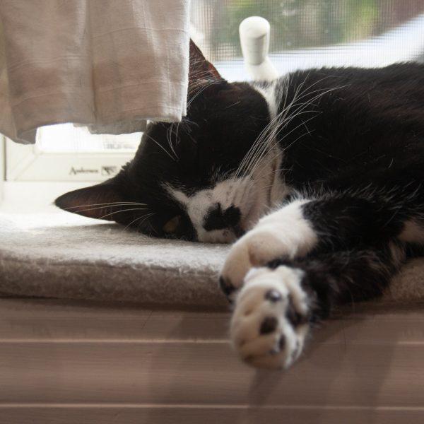 Dot cat asleep on a windowsill
