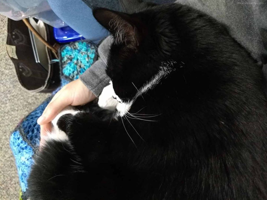 Tuxedo cat curled up in arms of person wearing grey hoodie. On person's lap is a crochet blanket. The cat has her hind paw in the person's cupped hand.